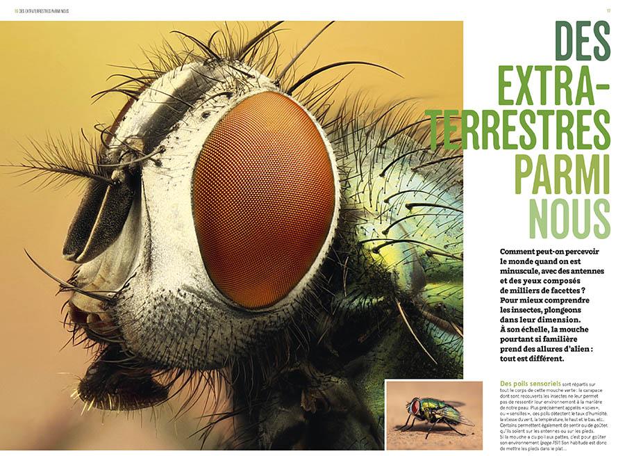 Les insectes en bord de chemin édition Delachaux